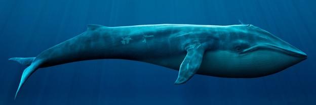 сленг трейдера киты на форекс