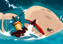 кто такие киты на крипторынке