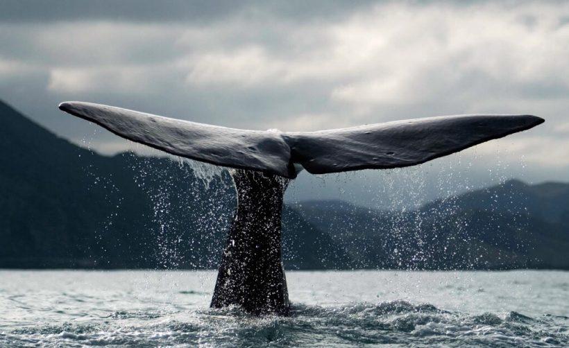 киты на крипторынке кто они такие